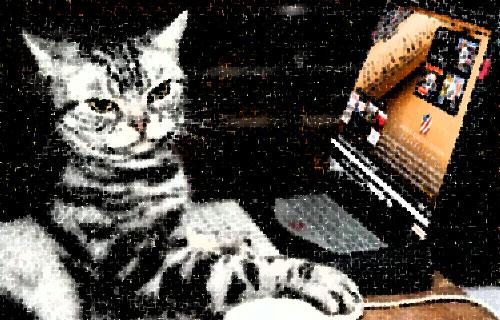 Detractor Cat Photo